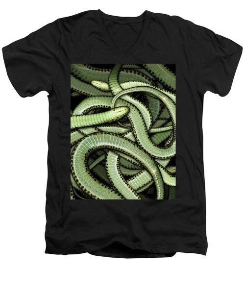 Garter Snakes Pattern Men's V-Neck T-Shirt by James Larkin