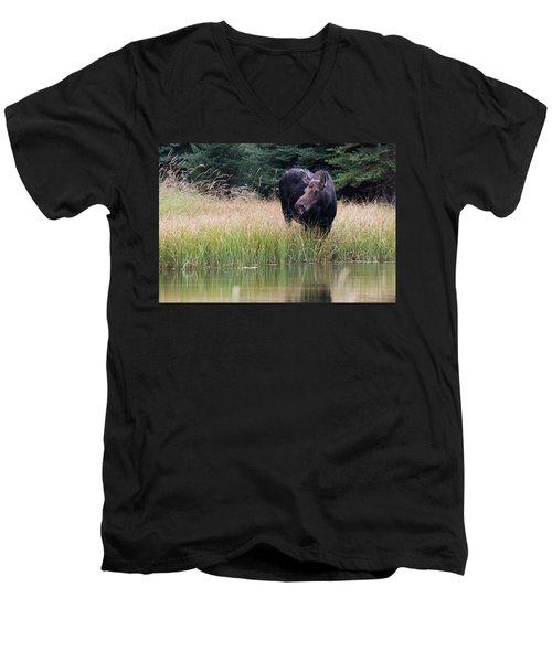 Men's V-Neck T-Shirt featuring the photograph Grand Teton Moose by Jennifer Ancker