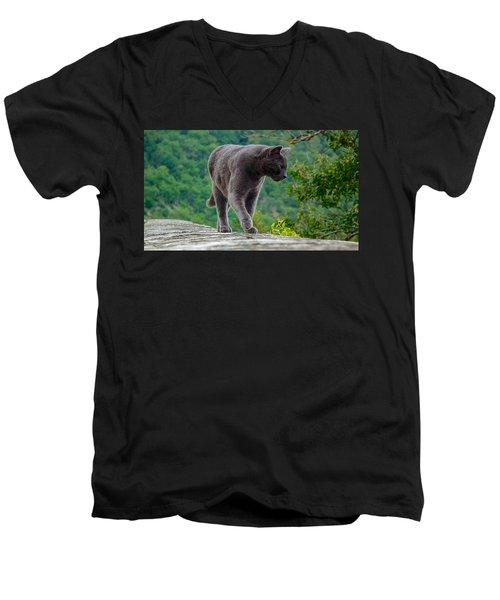 Gray Cat Stalking Men's V-Neck T-Shirt