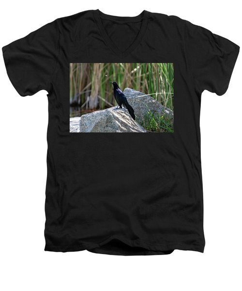 Great-tailed Grackle Men's V-Neck T-Shirt