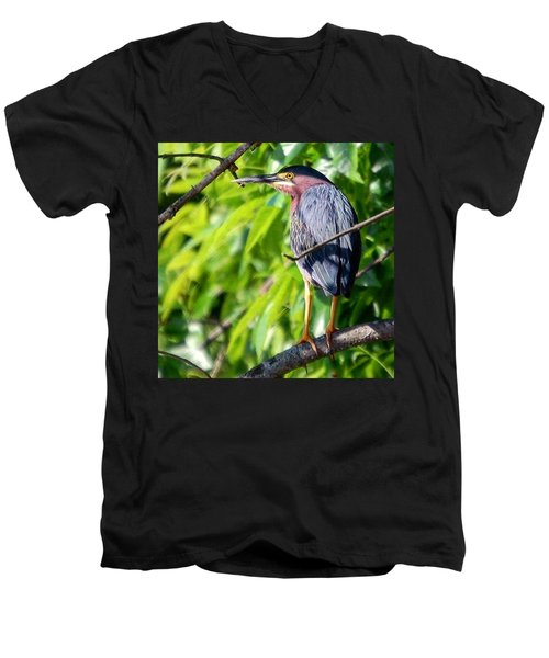 Men's V-Neck T-Shirt featuring the photograph Green Heron by Sumoflam Photography