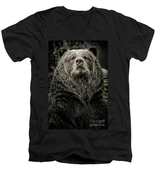 Grizzly Bear Men's V-Neck T-Shirt