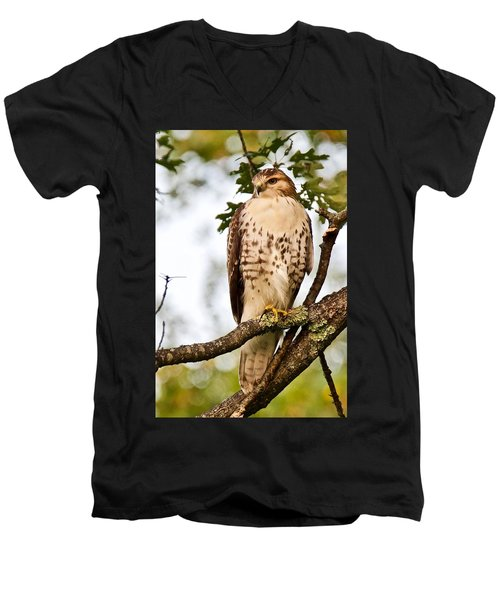 Hawk In Evening Light Men's V-Neck T-Shirt