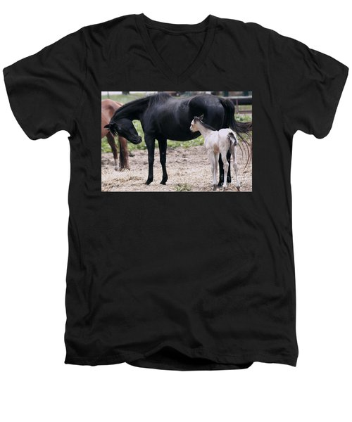 Men's V-Neck T-Shirt featuring the painting Horse And Colt by Debra Crank