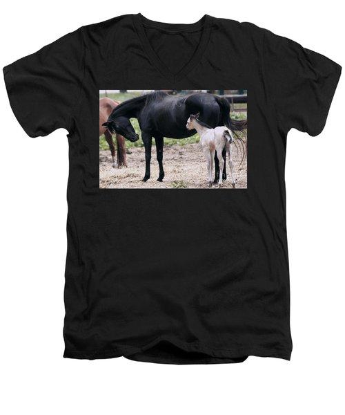 Horse And Colt Men's V-Neck T-Shirt