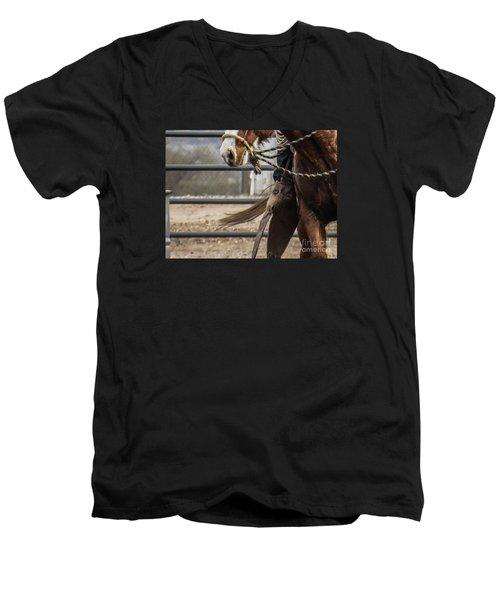 Horse In Hackamore Men's V-Neck T-Shirt