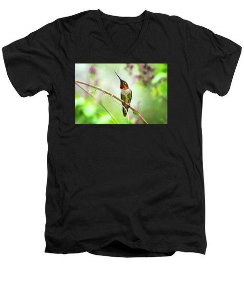 Hummingbird Looking For Love Men's V-Neck T-Shirt