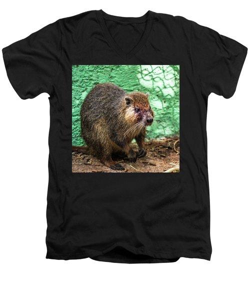 Hutia, Tree Rat Men's V-Neck T-Shirt
