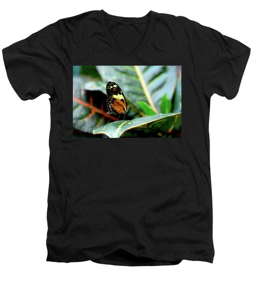 Ismenius Tiger Butterfly-2 Men's V-Neck T-Shirt