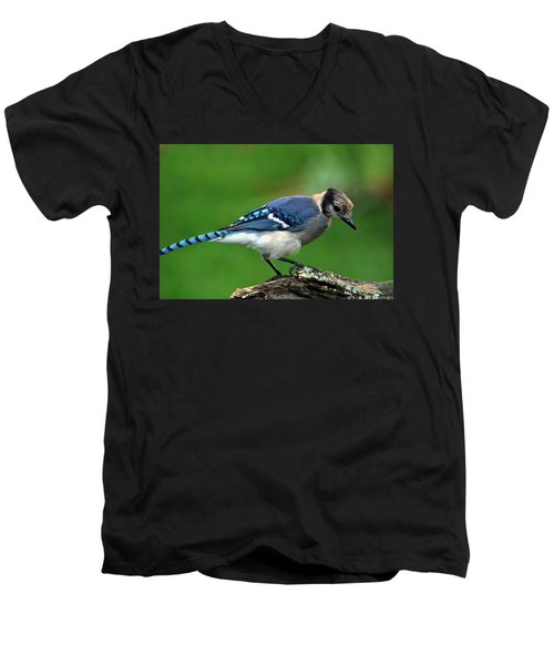 Juvenile Blue Jay  Men's V-Neck T-Shirt