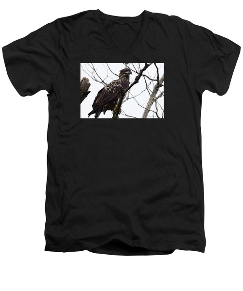 Juvenile Eagle 2 Men's V-Neck T-Shirt by Steven Clipperton