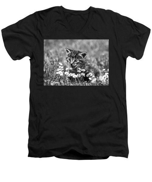 Kitten With Daisy's Men's V-Neck T-Shirt