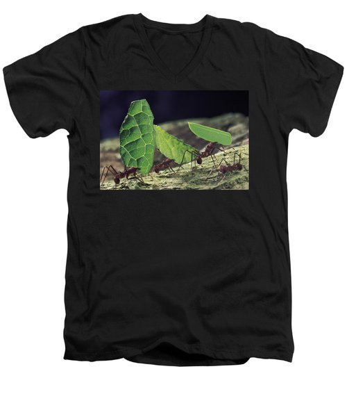 Leafcutter Ant Atta Cephalotes Workers Men's V-Neck T-Shirt by Mark Moffett