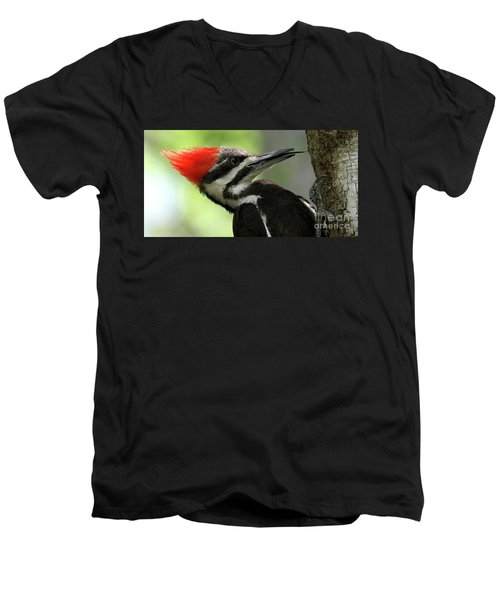 Lick It Up - Pileated Woodpecker Men's V-Neck T-Shirt