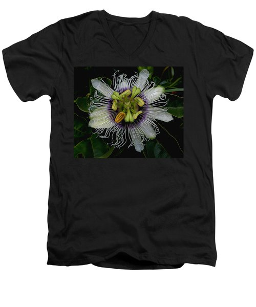 Lilikoi Passion Fruit Men's V-Neck T-Shirt