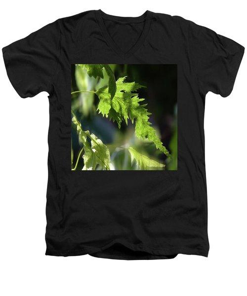Linden Leaf - Men's V-Neck T-Shirt