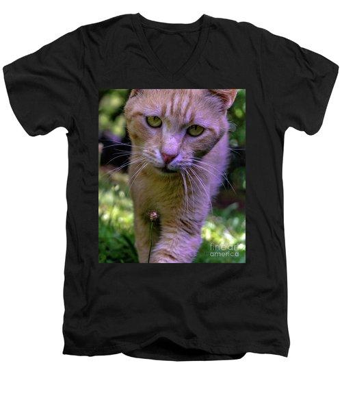 Lovey Feral Cat Portrait 0369a Men's V-Neck T-Shirt