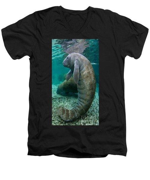Manatee In Crystal River Florida Men's V-Neck T-Shirt by Merton Allen