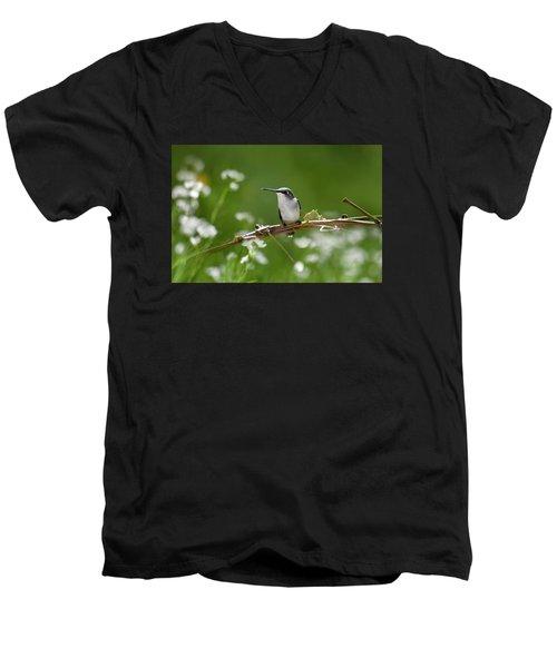 Meadow Hummingbird Men's V-Neck T-Shirt