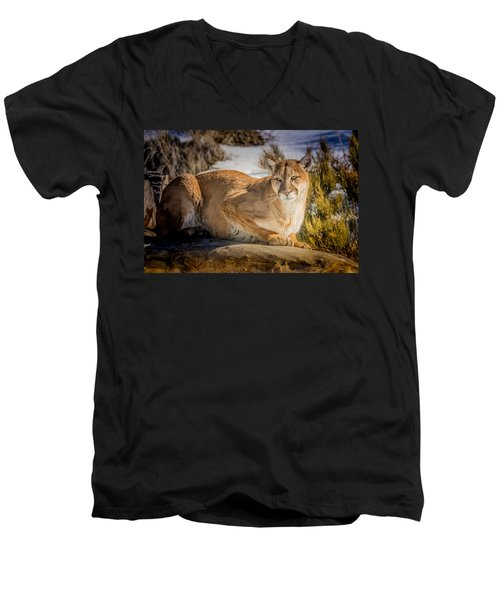 Men's V-Neck T-Shirt featuring the photograph Milo At The Ark by Janis Knight