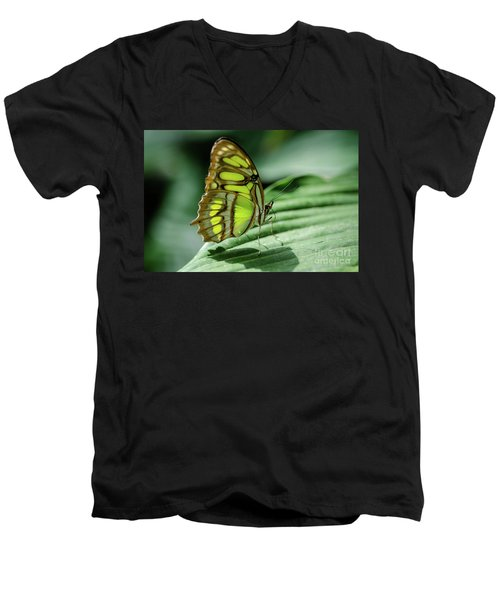 Miss Green Men's V-Neck T-Shirt by Nick Boren