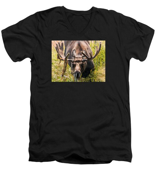 Moose Men's V-Neck T-Shirt by Cathy Donohoue