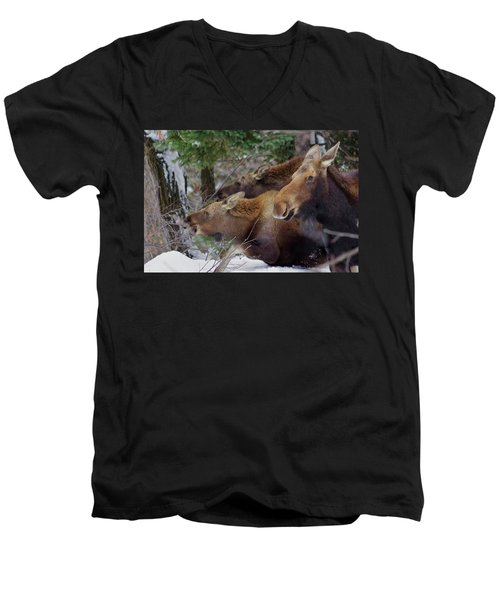 Moose Family Lunch Men's V-Neck T-Shirt