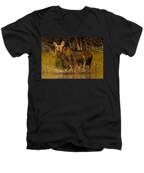 Moose Of Prong Pond Men's V-Neck T-Shirt