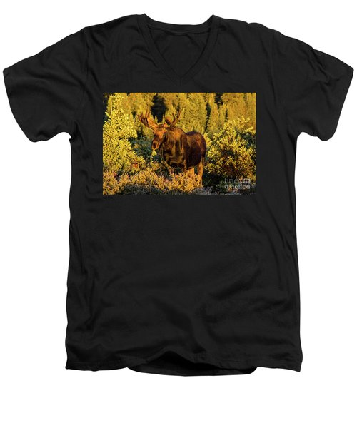 Morning Moose Men's V-Neck T-Shirt by Steven Parker