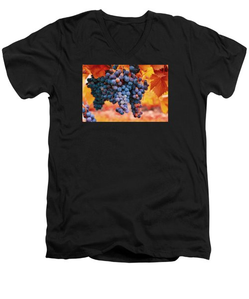 Men's V-Neck T-Shirt featuring the photograph Multicolored Grapes by Lynn Hopwood