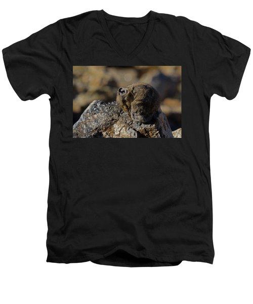 Napping American Pika - 4694 Men's V-Neck T-Shirt
