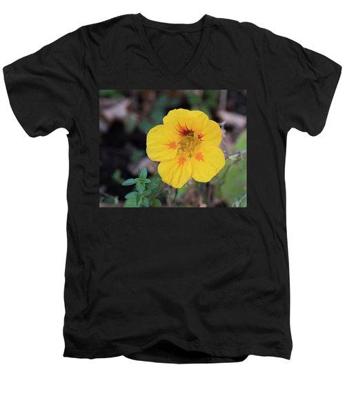 Nasturtium And Thyme Men's V-Neck T-Shirt