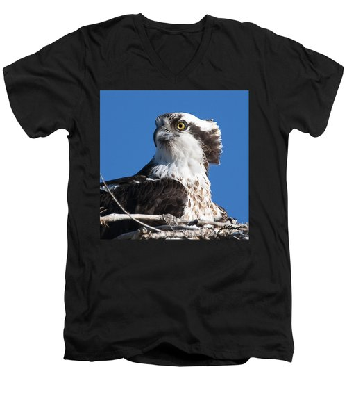 Nesting Osprey Men's V-Neck T-Shirt