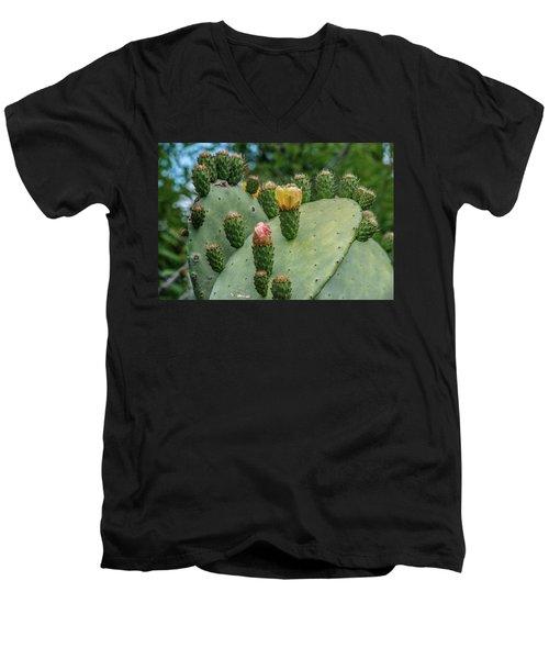 Opuntia Cactus Men's V-Neck T-Shirt