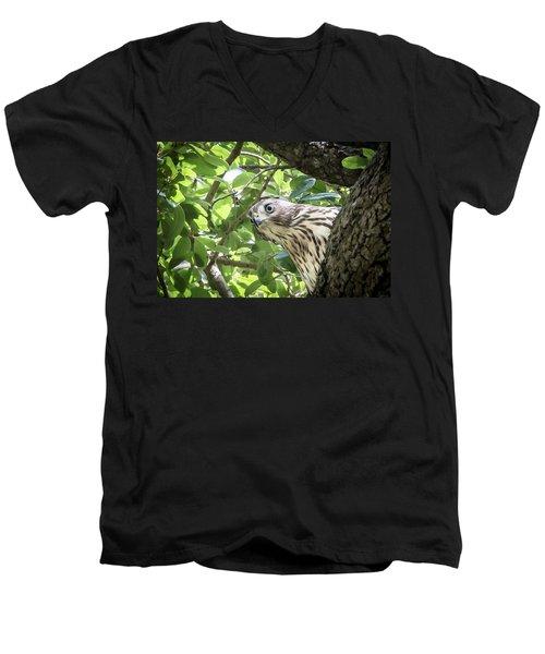 Red-shouldered Hawk Fledgling - 5 Men's V-Neck T-Shirt