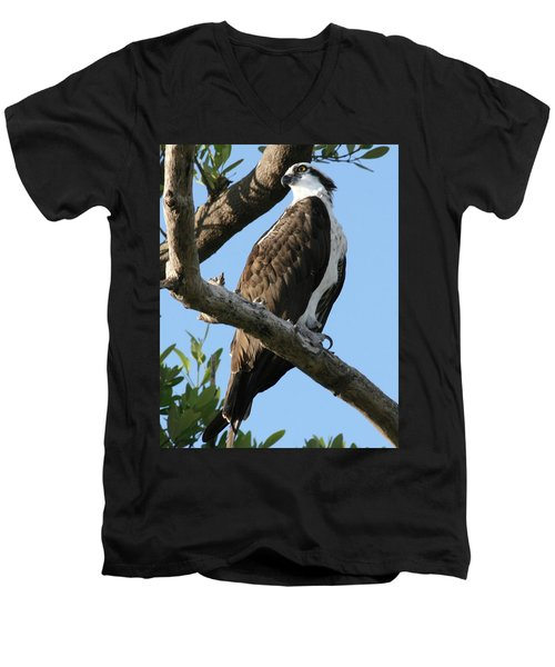 Osprey - Perched Men's V-Neck T-Shirt by Jerry Battle