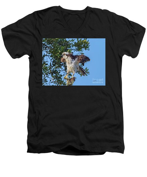 Osprey With Meal Men's V-Neck T-Shirt