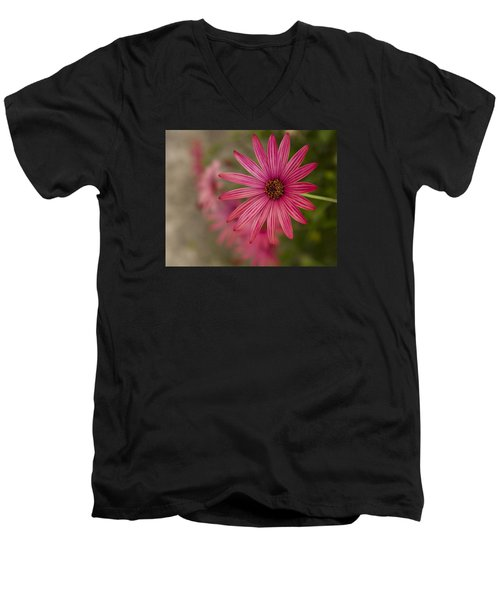 Men's V-Neck T-Shirt featuring the photograph Osteospermum The Cape Daisy by Shirley Mitchell
