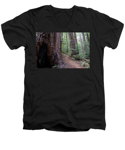 Pathway Through A Redwood Forest On Mt Tamalpais Men's V-Neck T-Shirt