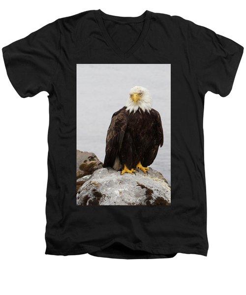 Perched Bald Eagle Men's V-Neck T-Shirt