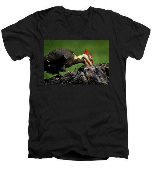Pileated 3 Men's V-Neck T-Shirt by Douglas Stucky