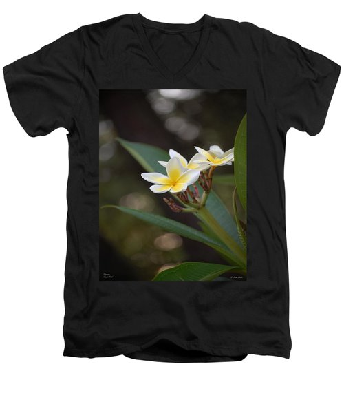 Plumeria II Men's V-Neck T-Shirt by Robert Meanor
