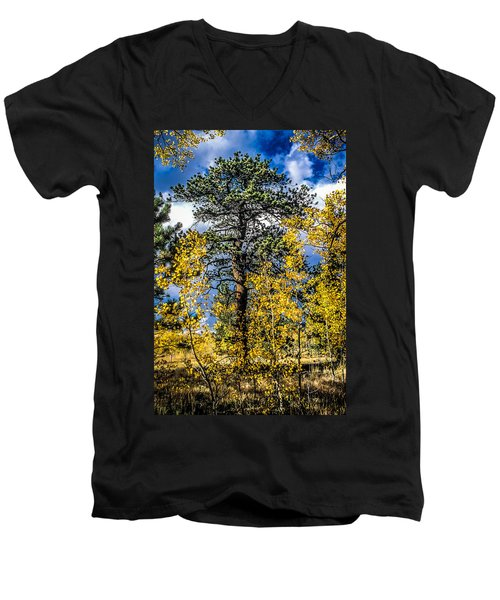 Ponderosa  Tree In The Aspens Of Fall Colorado Men's V-Neck T-Shirt