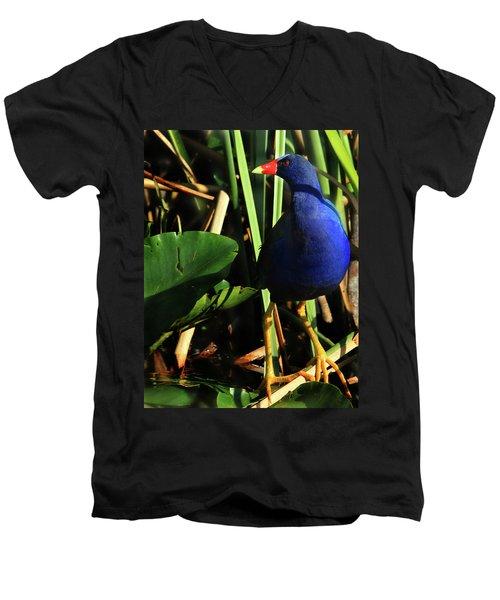 Purple Gallinule Men's V-Neck T-Shirt