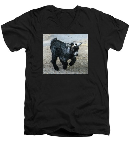 Pygmy Goat Kid Men's V-Neck T-Shirt