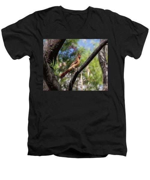 Pyrrhuloxia At Work Men's V-Neck T-Shirt