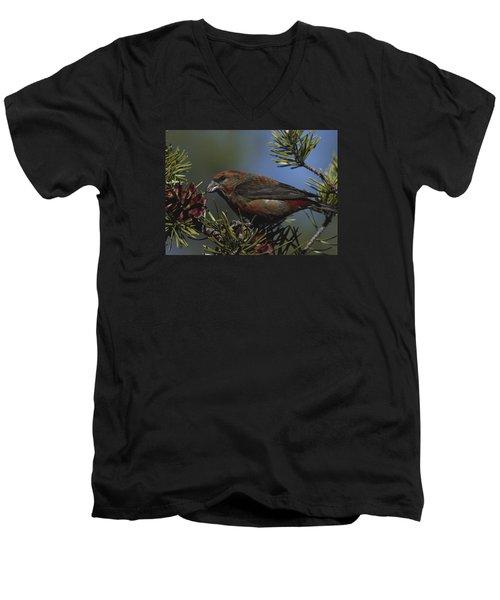 Red Crossbill Feeds On Pine Cone Seeds Men's V-Neck T-Shirt by Mark Wallner
