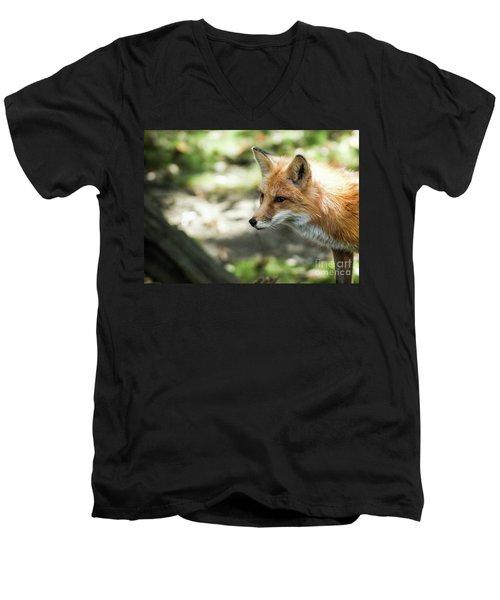 Red Fox Men's V-Neck T-Shirt by Lisa L Silva
