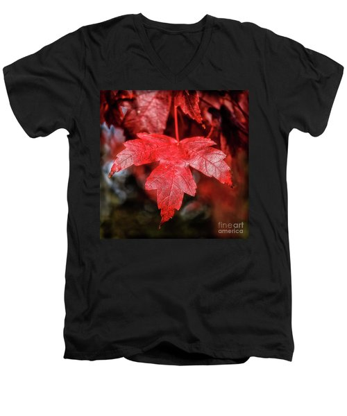 Red Leaf Men's V-Neck T-Shirt by Robert Bales