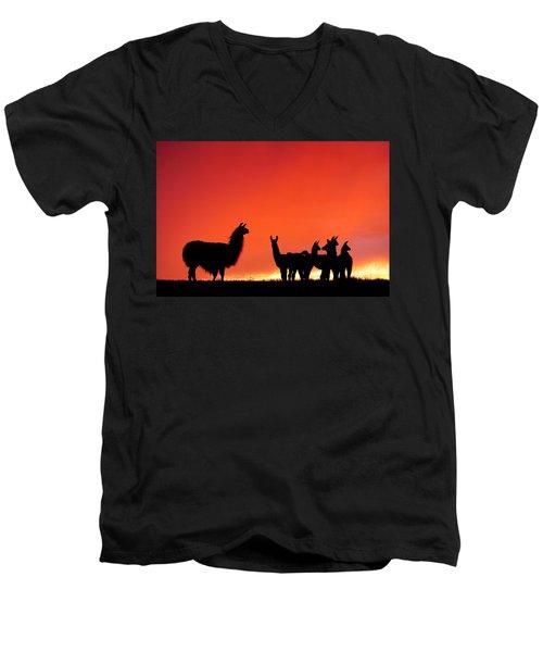Red Llama Sunset 2 Men's V-Neck T-Shirt